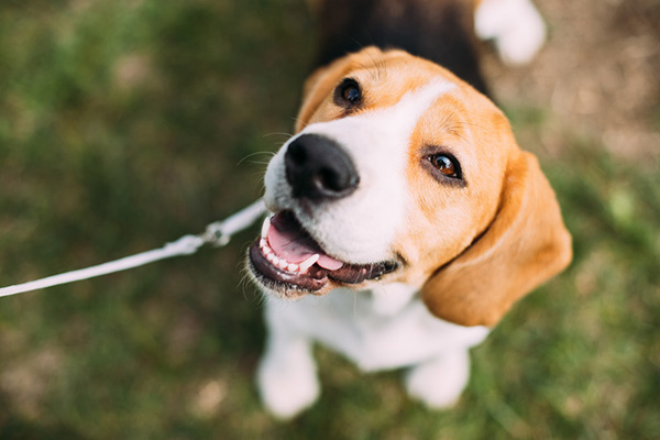 Pet Dental Care in Walnut, IL