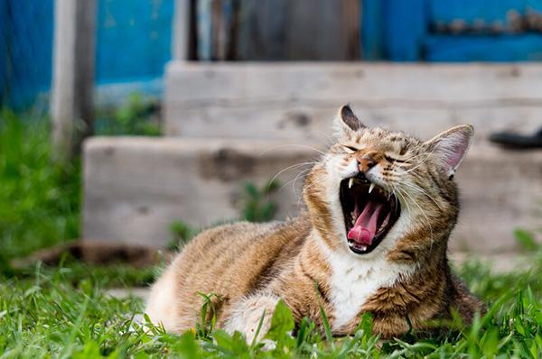 Walnut, IL Pet Dental Care